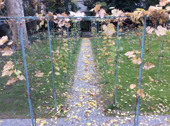 Виноградники Леонардо, осень